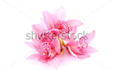 Stock-photo-orchid-isolated-on-white-background-55651843