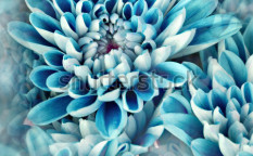 Stock-photo-photo-illustration-of-flowers-in-blue-97436714