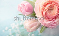 Stock-photo-pink-flowers-in-a-vase-96876382