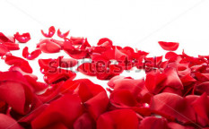 Stock-photo-red-rose-petals-50785528