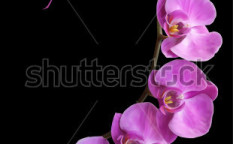 Stock-vector-orchid-flower-blossom-vector-90128755