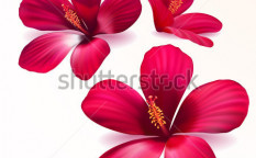 Stock-vector-three-vector-realistic-purple-flowers-114083749