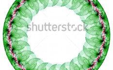 Stock-photo-foliage-green-mandala-on-the-white-background-5614291