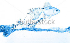 Stock-photo-gold-fish-jumping-over-slash-blue-water-111159233